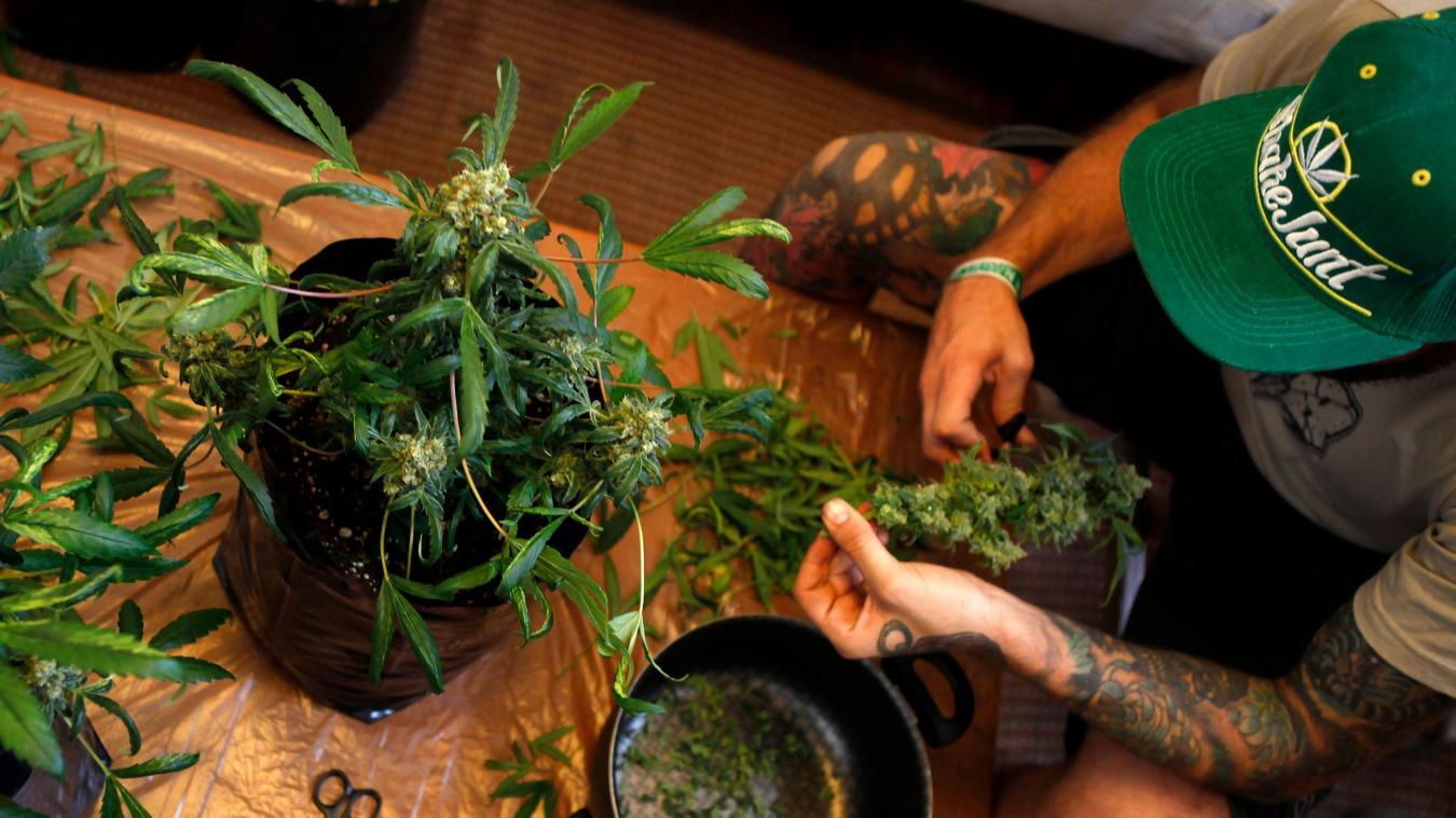 comment utiliser le cannabis medical